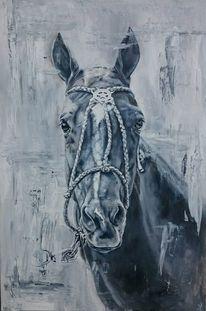 Polo, Halfter, Pferde, Portrait
