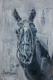 Pony, Polo, Halfter, Portrait