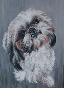 Hund, Portrait, Shih, Malerei