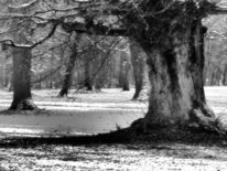 Fotografie, Landschaften, Winter, Park