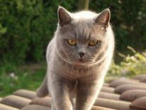 Katze, Fotografie, Tiere