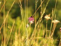 Blumen, Biene, Sommer, Fotografie
