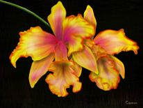 Digitale kunst, Orchidee, Digital art, Orange