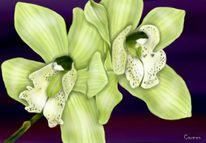Grün, Blüte, Blumen, Digital art