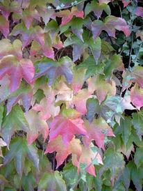 Natur, Fotografie, Laubfärbung, Herbst