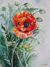 Mohnblumen, Blumen, Natur, Malerei