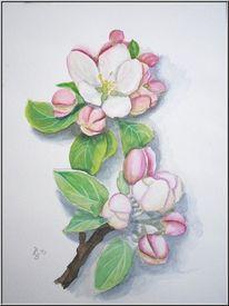 Baum, Apfelbl, Aquarellmalerei, Blüte