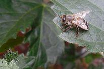 Insekten, Garten, Natur, Biene