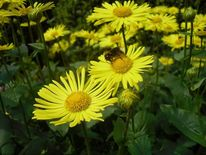 Fotografie, Frühling, Natur, Blumen