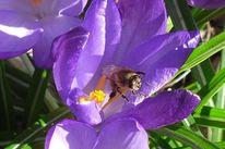Pflanzen, Tiere, Fotografie, Blumen