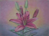 Blumen, Lilie, Garten, Natur
