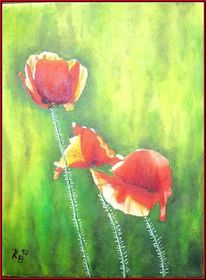 Garten, Mohn, Blüte, Blumen