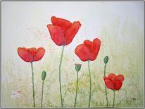 Wiese, Mohn, Blumen, Rot
