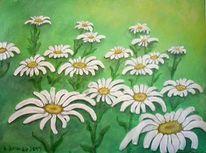 Blumen, Garten, Margerite, Natur