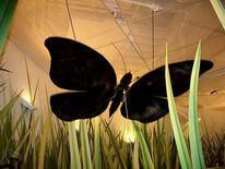 Klimahaus, Schmetterling, Fotografie