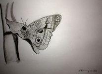 Bleistiftzeichnung, Schmetterling, Zeichenkarton, Zeichnungen
