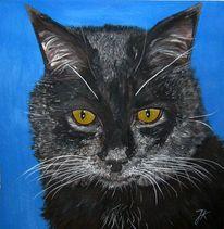 Katze, Kater, Schwarz, Malerei