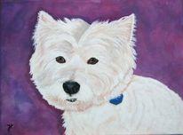 Mecki, Hund, Weiß, Malerei