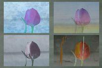 Gefühl, Blumen, Tulpen, Digitale kunst