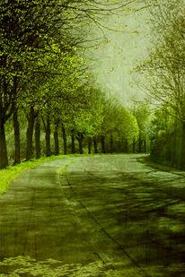 Wald, Baum, Blätter, Grün