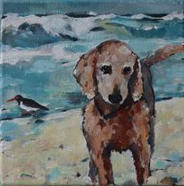 Meer, Vogel, Hund, Wasser