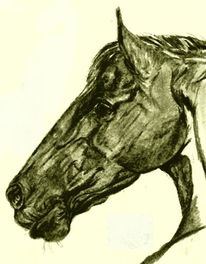 Holsteiner, Zeichnung, Hengst, Pferde
