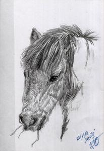 Zeichnung, Pferde, Grafit, Schwarz weiß