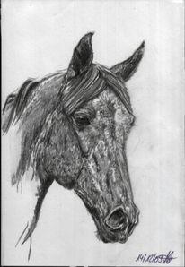 Grafit, Pferde, Trakehner, Schwarz weiß