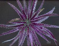 Bromelien, Mexiko, Zimmerpflanze, Malerei