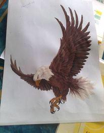 Adler, Bleistift malerei