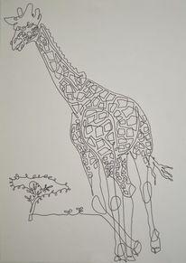 Tiere, Baum, Bäumchen, Netzgiraffe