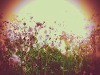 Gras, Distel, Wiese, Liegen