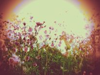 Gras, Grün, Distel, Wiese