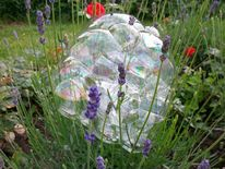 Blumen, Lavendel, Seifenblasen, Malerei