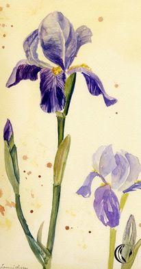 Iris, Blumen, Schichtarbeit, Malerei