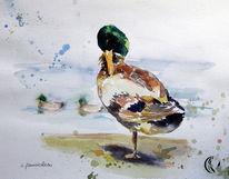 Aquarellmalerei, Tiere, Erpel, Ente