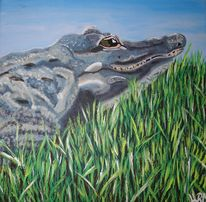 Alligador, Usa, Krokodil, Everglades