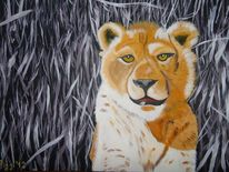 Raubtier, Löwin, Savanne, Afrika