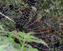 Regen, Natur, Spinne, Netz