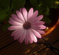 Blumen, Pflanzen, Fotografie