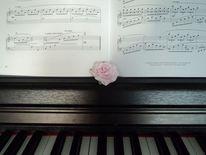 Rose, Noten, Klavier, Fotografie