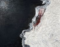 Erdbeben, Art coach international, Salome, Fukushima