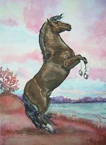 Pferde, Aquarellmalerei, Zeichnung, Hengst