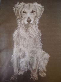 Hund, Zeichnungen