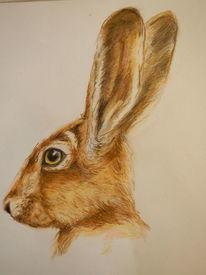 Tierzeichnung, Buntstiftzeichnung, Zeichnungen