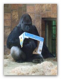 Affe, Gorilla, Lesen, Fotografie