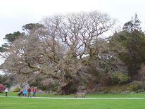 Eichen, Park, Baum, Fotografie