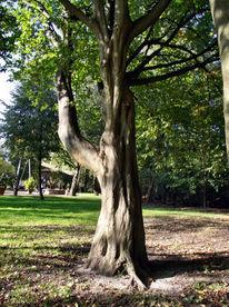 Landschaft, Alte bäume, Fotografie, Serie