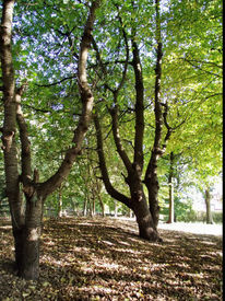 Landschaft, Alte bäume, Fotografie, Herbst