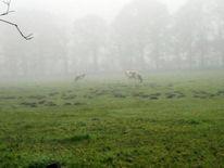 Tiere, Landschaft, Nebel, Fotografie